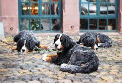 Les chiens prennent la neige... (Fribourg)