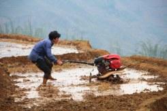 Le motoculteur dans la rizière...