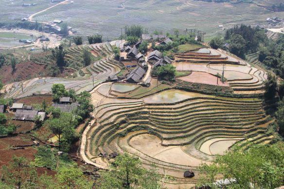 Rizières dans la région de Sapa