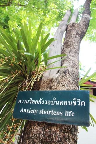Leçon de Chiang Mai....