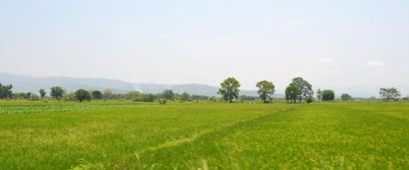Petit paysage verdoyant, capturé depuis la moto qui fuse.