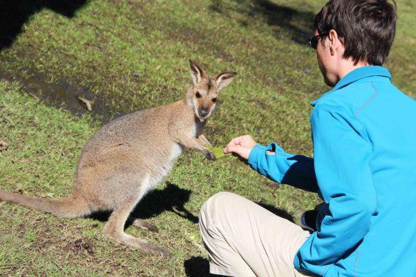 MAnu et le kangourou